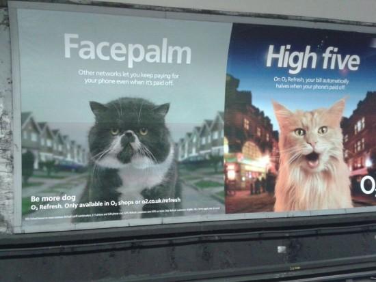 Grumpy or happy